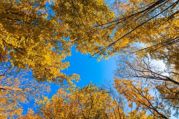 Piękne jesienne liście w lesie