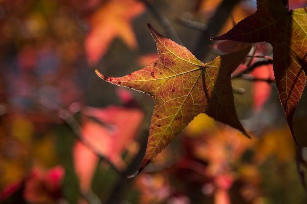 Piękne jesienne tło z opadającymi liśćmi.