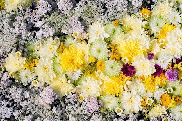 Piękne jesienne żółte i białe kwiaty tło kolorowe kwiaty chryzantemy widok z góry