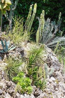 Piękne kaktusy i inne soczyste rośliny na kamieniach