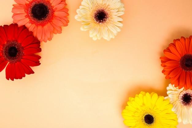 Piękne kolorowe kwiaty gerbera