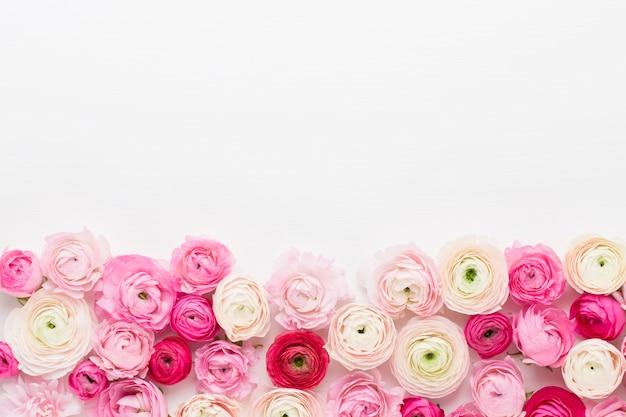 Piękne kolorowe kwiaty jaskier na białym tle. wiosna z życzeniami.
