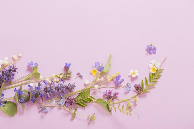 Piękne kolorowe letnie kwiaty