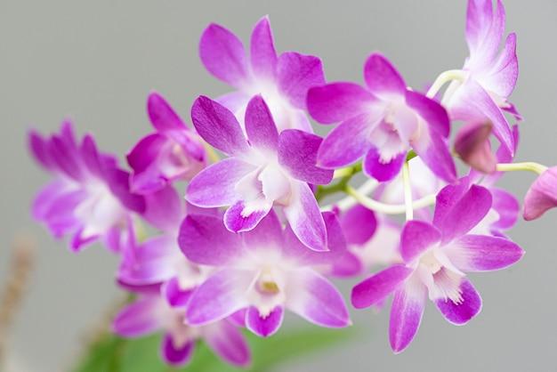 Piękne kolorowe orchidee. kolor różowy i biały.