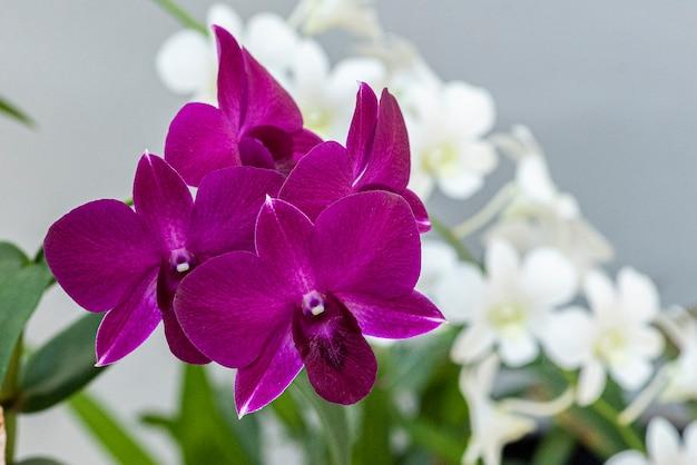 Piękne kolorowe orchidee. kolor różowy.