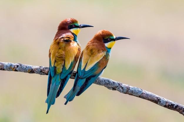 Piękne kolorowe ptaki siedzące na gałęzi