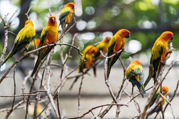 Piękne kolorowe słońce conure papuga ptaki
