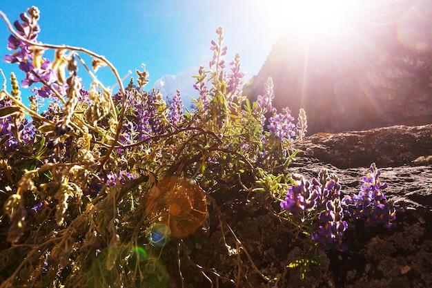 Piękne krajobrazy górskie w cordillera huayhuash, peru, ameryka południowa
