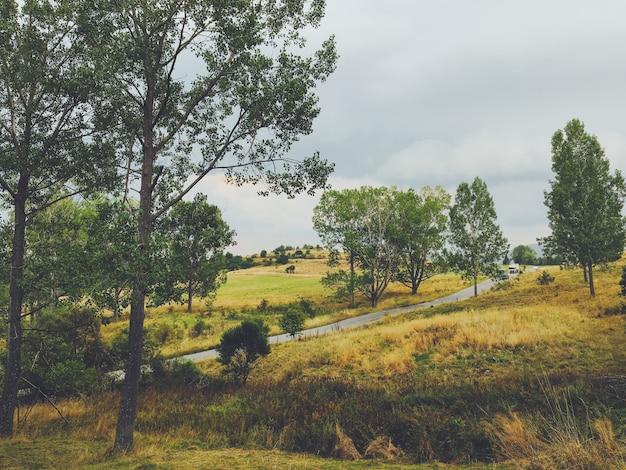 Piękne krajobrazy lasu na wsi