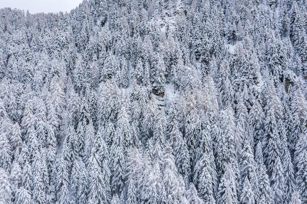 Piękne krajobrazy lasu w zaśnieżonych alpach zimą