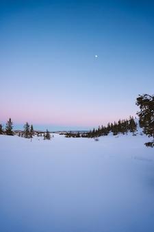 Piękne krajobrazy lasu z dużą ilością jodeł pokrytych śniegiem w norwegii