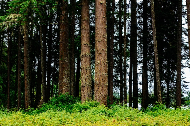 Piękne krajobrazy niesamowitego dzikiego lasu z zapierającą dech w piersiach zielenią