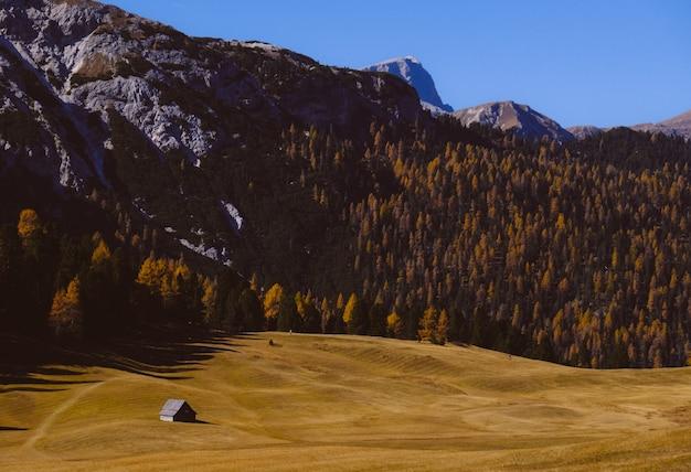 Piękne krajobrazy wysokich gór skalistych otoczonych zielonymi drzewami