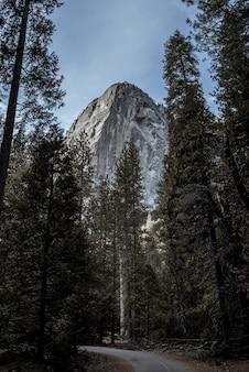 Piękne krajobrazy zielonych jodeł otoczonych wysokimi górami skalistymi