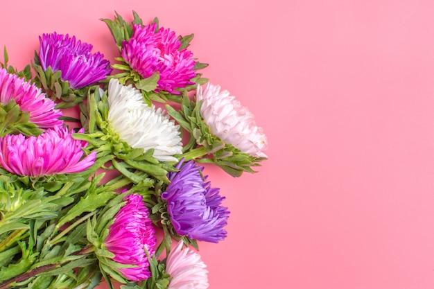Piękne kwiaty aster na pastelowy różowy kolor tła. leżał płasko.