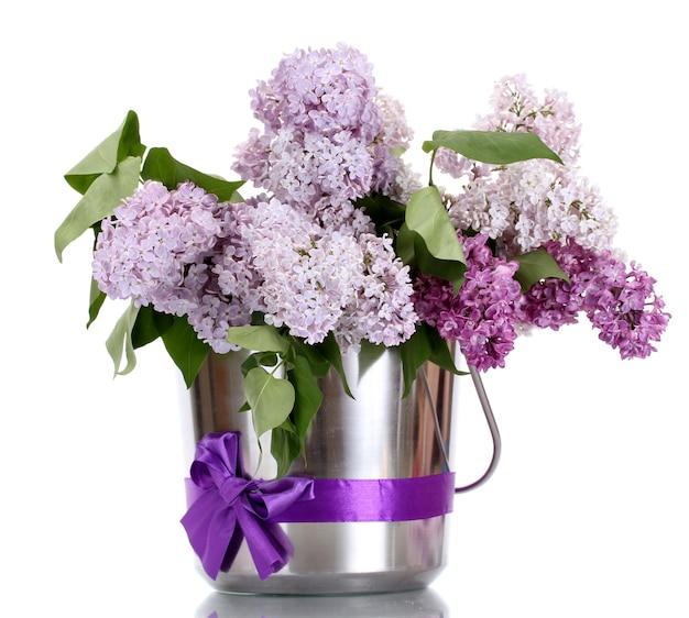 Piękne kwiaty bzu w metalowym wiaderku na białym tle