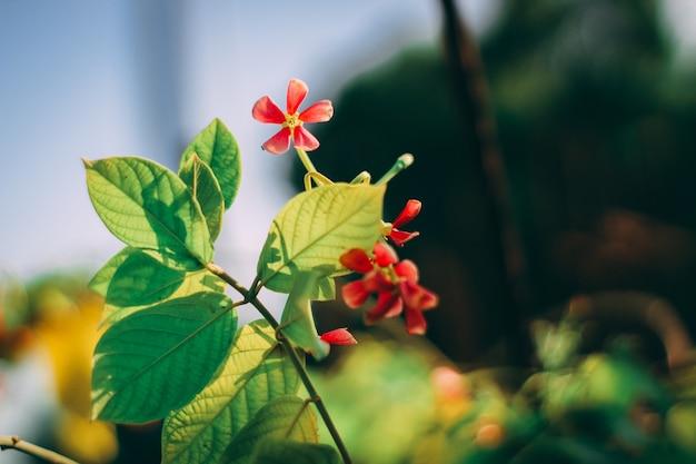 Piękne kwiaty i liście brackground