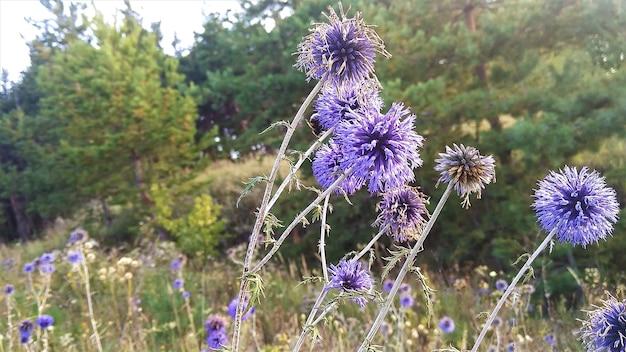 Piękne kwiaty i rośliny wokół nas