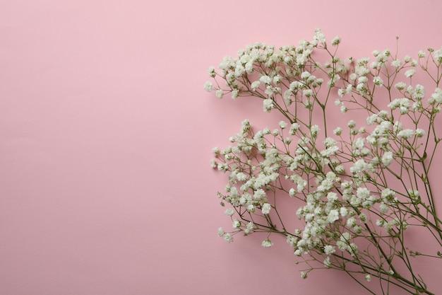 Piękne kwiaty łyszczec na różowym tle