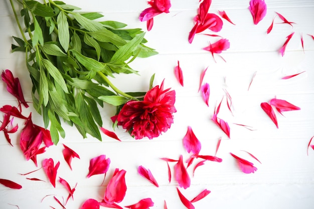 Piękne kwiaty na białym tle. bukiet piwonii. idealnie leży na płasko z płatkami. pocztówka z wakacji szczęśliwych matek. pozdrowienia z okazji międzynarodowego dnia kobiet. pomysł na urodziny na reklamę lub promocję.