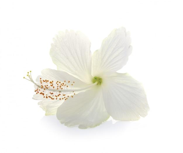 Piękne kwiaty na białym tle