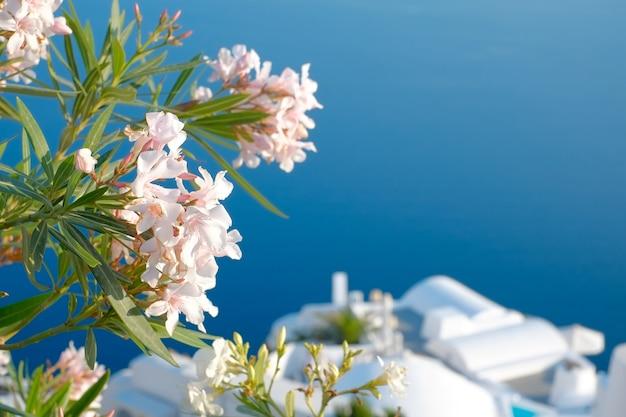 Piękne kwiaty na wyspie santorini na wyspie santorini