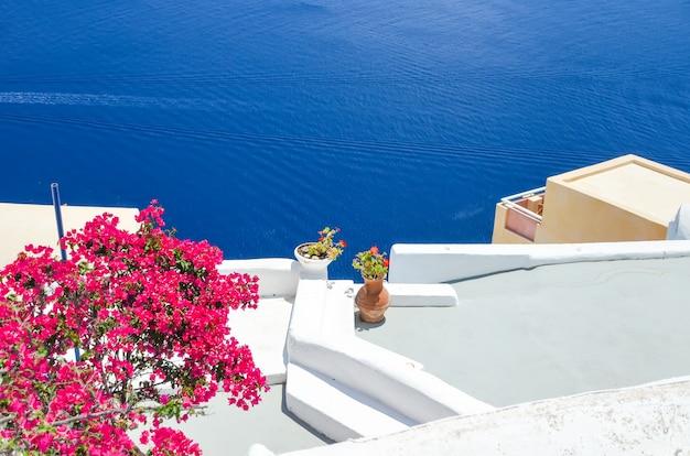 Piękne kwiaty na wyspie santorini