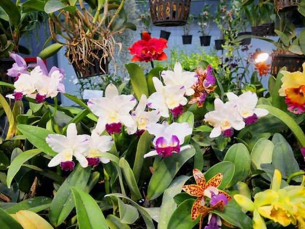 Piękne kwiaty orchidei zbliżenie