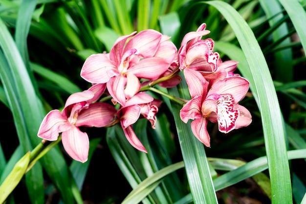 Piękne kwiaty orchidei