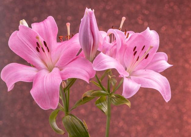 Piękne kwiaty różowych lilii z kolorowym tłem