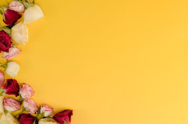 Piękne kwiaty róży z miejsca na kopię