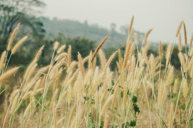 Piękne kwiaty trawy w przyrodzie rano, naturalne tło