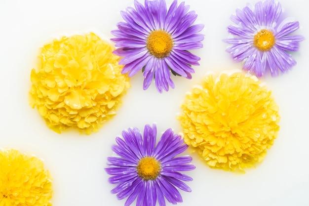 Piękne kwiaty w kąpieli mlecznej. pojęcie zabiegów spa, relaks, zabiegi spa, terapia