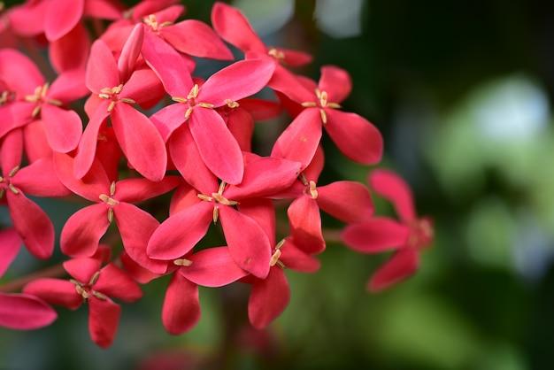 Piękne kwiaty w ogrodzie kwitnące latem.