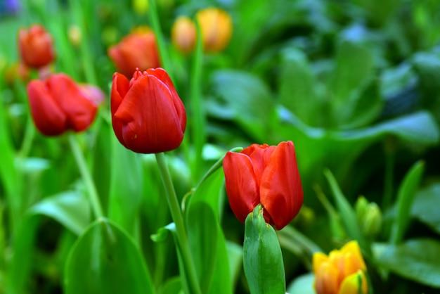 Piękne kwiaty w ogrodzie obok domu. zielone liście z pięknym światłem słonecznym używany jako obraz tła.