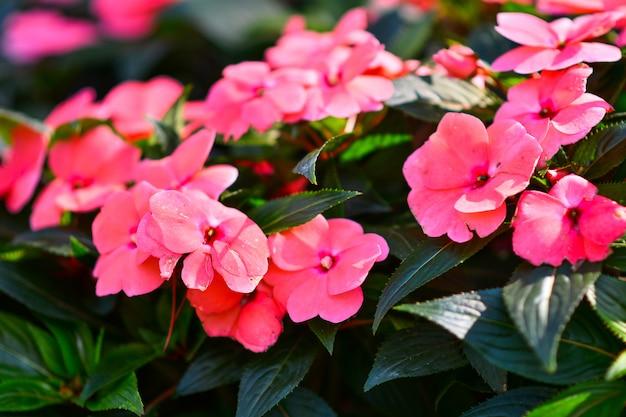 Piękne kwiaty w ogrodzie.