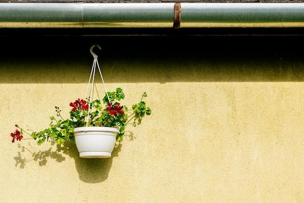 Piękne kwiaty wiszą w doniczce na zewnątrz do dekoracji domu. koncepcja kwiaty.