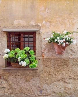 Piękne kwiaty zielone i białe kwiaty ręce na oknie domu w starożytnym budynku we włoszech. format pionowy z copyspace. piękna ściana domu.
