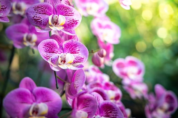 Piękne kwitnące orchidee w lesie