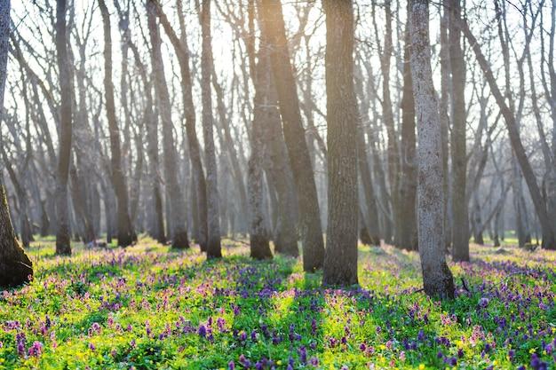 Piękne leśne krajobrazy. wiosenne kwiaty w lesie.