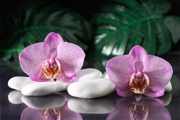 Piękne liliowe kwiaty orchidei leżące na białych kamieniach z liśćmi monstera
