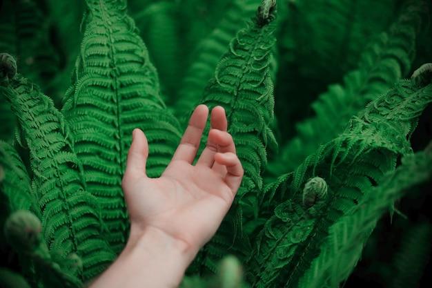 Piękne liście paproci. zielone tło naturalne kwiatowy paproci