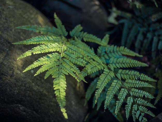 Piękne liście paproci zielone w słońcu