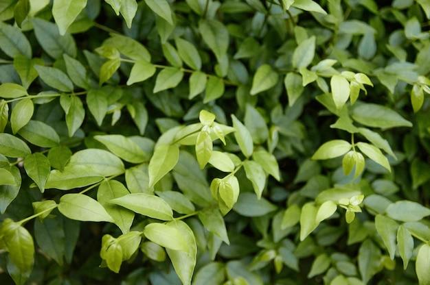 Piękne liście w tle