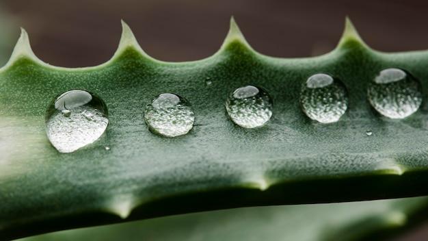 Piękne makro roślina z kroplami deszczu