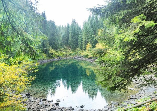 Piękne mgliste jezioro w karpatach
