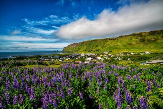 Piękne miasto vik i myrdal islandia w lecie.