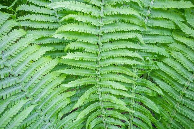 Piękne młode pędy wywodzą się z liści paproci na naturalnym tle