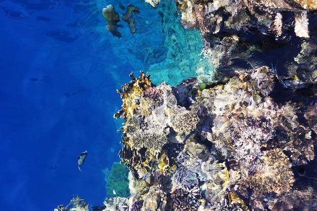 Piękne morze czerwone w egipcie