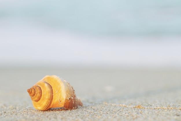 Piękne Muszle Na Piasku Z Falą Na Plaży Nad Morzem W świetle Słońca Pod Zachodem Słońca. Premium Zdjęcia